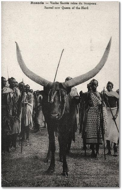 Derrière venait la longue file des porteurs de bagages du mwami et le troupeau des vaches inyambo, les préférées de Musinga. Scholastique Mukasonga, Rwanda