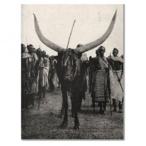 'La vache du roi Musinga' en images